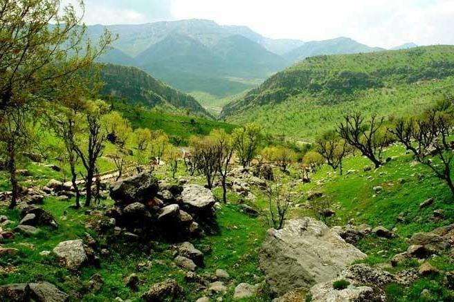 همایش ملی مدیریت و خدمات بوم سازگان جنگل های طبیعی و دست کاشت در گلستان برگزار می گردد