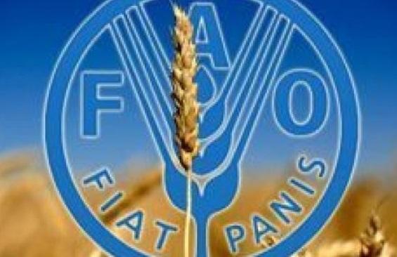 هشدار فائو برای تهدید های امنیت غذایی در شرایط کرونا
