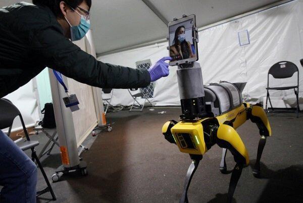 تشخیص کرونا با استفاده از سگ رباتیک