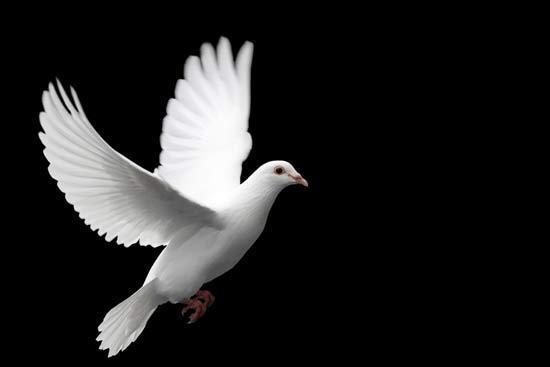 گلچین متن زیبا برای تسلیت درگذشت عزیزان