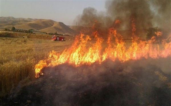 جزئیات تدوین طرح بیمه آتش سوزی مزارع و باغ ها
