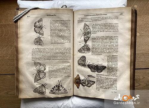 عکس، کشف یک پروانه 400ساله در میان کتابی قدیمی